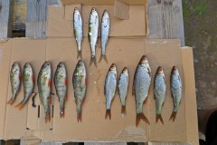 Reichliche Fischmahlzeit